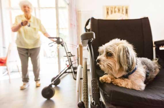 Klein Gotha Pflege zuhause ambulant Senioren Angebot